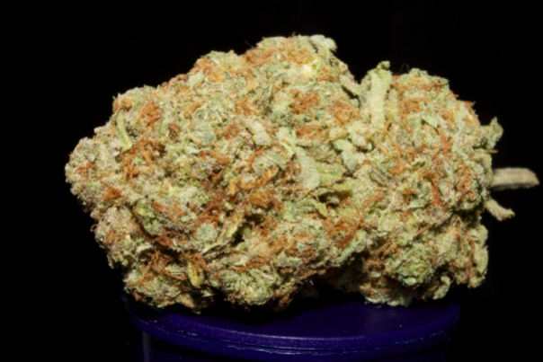 Strawberry Cough Best Writer Sativa Versability